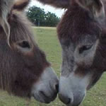 Donkeys Sharing Secrets