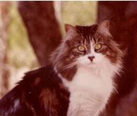 Muffy - 1977