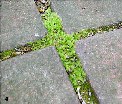A Cross of Moss