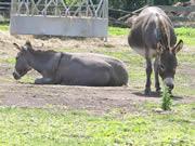 Donkeys in Prince Edward County