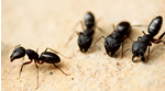 Ant Party