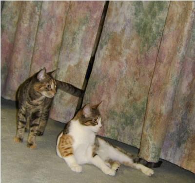 Kittens near playroom