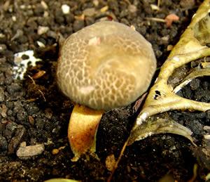 Mushrooms12